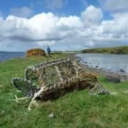 Lobster-creel-on-Orkney-shore