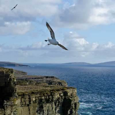 Noup Head Westray Orkney